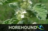 گیاه دارویی فراسیون و اثرات شگفت انگیز  آن در درمان بیماری ها