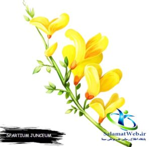 طبع گل طاووسی