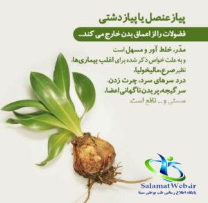 خواص درمانی پیاز عنصل در طب سنتی