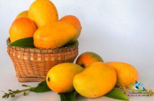 انبه میوه چه فصلی است؟