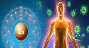 عنصر زینک و تقویت سیستم ایمنی بدن