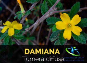 خرید گیاه دامیانا
