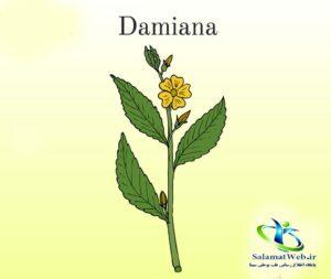 اندام دارویی گیاه دامیانا
