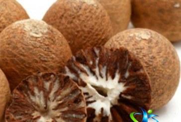 گیاه فوفل و خواص دارویی آن + روش مصرف و عوارض فوفل