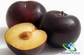 میوه آلو و انواع آن+ خواص و مضرات آلو